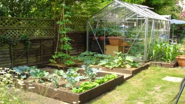 Backyard-kitchen-garden-ideas