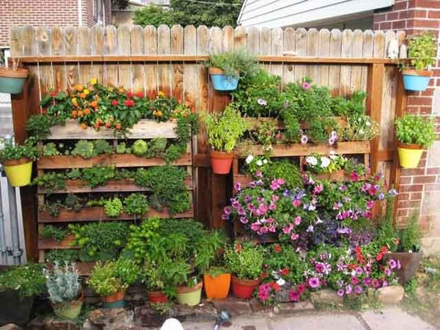 kitchen garden ideas on wall