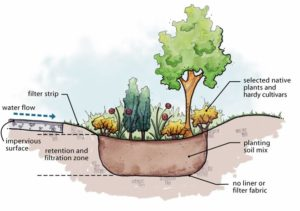 Schematic sectional diagram of a Rain Garden - Water Sensitive Urban Design