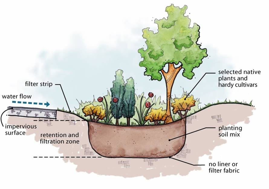 Schematic sectional diagram of a Rain Garden - Water Sensitive Urban Design