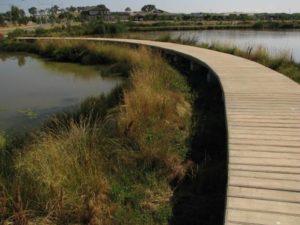 constructed wet lands
