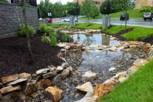 landscaped rain gardens