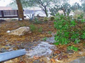 landscaped rain gardens - water sensitive urban design