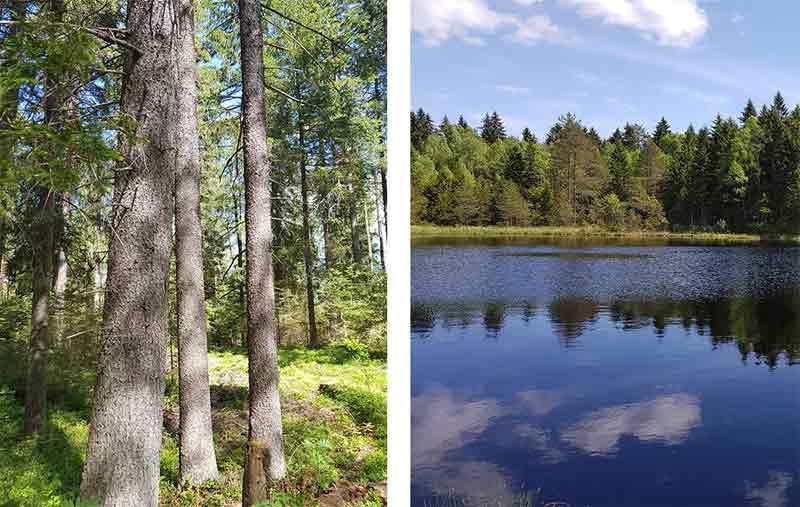 Lake Bezdibene